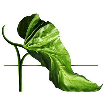 Buty dla wegan, Buty wegańskie - grafika strony